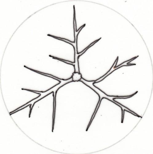 DraufsichtObstbaum